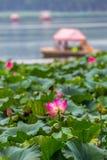 Lotus Pond Arkivfoton