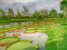 Lotus Pond Fotografia Stock Libera da Diritti