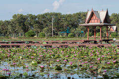 Lotus Pond Photo stock