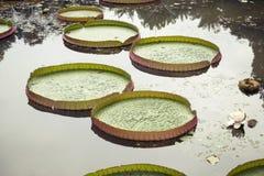Lotus Pond royalty-vrije stock fotografie