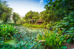 Lotus pond around with green tree and small hut Royalty Free Stock Images