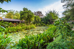 Lotus pond around with green tree and small hut Stock Photography