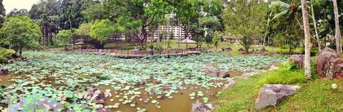 Lotus pond - Bishan-Ang Mo Kio park Stock Photos