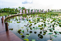 Lotus pond with brown boardwalks Stock Photo