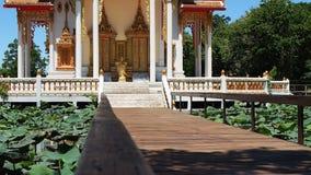 Lotus pond at Buddhist temple stock footage