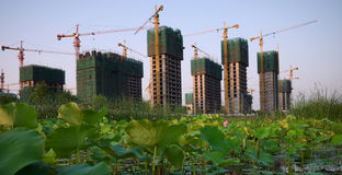 Lotus pond and buildings Royalty Free Stock Photography