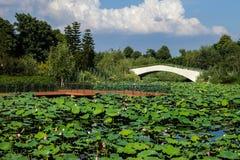 Lotus pond in Chinese garden Royalty Free Stock Image