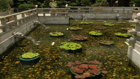 Lotus in pond with dragon`s heads a continuous stream of water into a pond.  stock footage