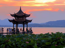 Lotus pond an evening in west lake Stock Images