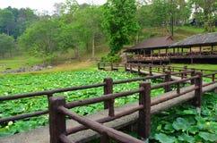 Lotus pond at Fang Hot spring Stock Photography