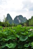 Lotus pond in guilin Stock Photo