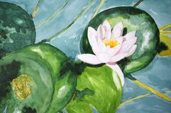Lotus in the pond Royalty Free Stock Images