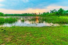Sunrise at the Lotus pond. The Lotus pond has cloudy in the mornig and Sunrise is beautiful Stock Photo