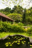 Lotus pond in Indonesian park Stock Photography