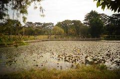 Lotus pond landscape Stock Photos