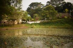 Lotus pond landscape Stock Images