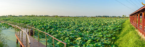 Lotus pond and The long corridor Royalty Free Stock Photos
