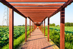 Lotus pond and The long corridor Stock Photography