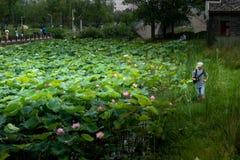 Lotus Pond-Nanchang mögen See-Sumpfgebiet-Park lizenzfreies stockbild
