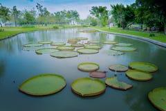 Lotus Pond nel parco pubblico di Suan Luang Rama IX fotografia stock libera da diritti