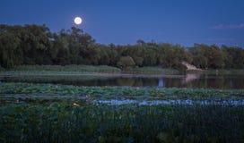 Lotus pond at night Royalty Free Stock Photos