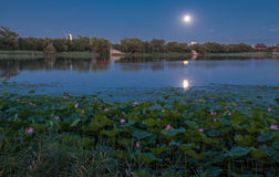 Lotus pond at night Royalty Free Stock Photos