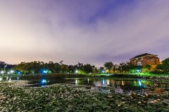 Lotus pond at night Royalty Free Stock Photo