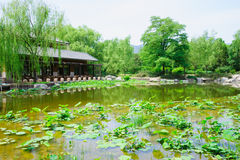 Lotus pond in a park Stock Photo
