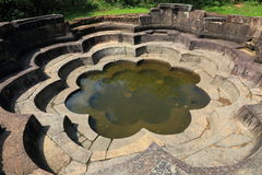 Lotus pond in Polonnaruwa Royalty Free Stock Images