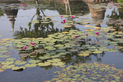 Lotus pond with the reflection of ancient Sukhothai Royalty Free Stock Photos