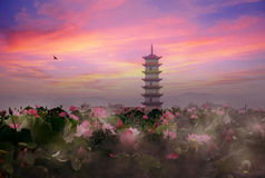 Free Lotus Pond Sunset Stock Photos - 10784373