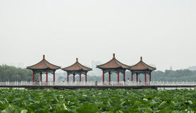 Lotus pond and the traditional hexiang. Greenery is abundant in the lotus pond, the lotus leaf in the large around the traditional bridge, pavilion, biochemical Royalty Free Stock Photography