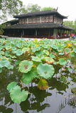 Lotus pond and traditional house in China Royalty Free Stock Image