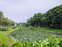 Lotus pond and trees Stock Images