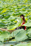 In the Lotus Pond. Royalty Free Stock Photography