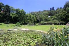 Lotus pond of wanshi botanical garden Royalty Free Stock Image