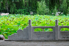 Lotus pond and white marble railings Royalty Free Stock Photo