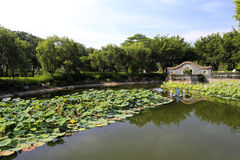 The lotus pond of yuanboyuan park Royalty Free Stock Photography
