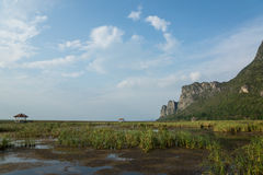 Swamp. In Sam-Roi-Yot National park. Prachuap Khiri Khan Province. Thailand Stock Images