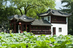 Lotus pool with chinese traditional buildings. The lotus flowers are in full  blossom in the summer in a garden with Chinese traditional buildings. People are Stock Photo
