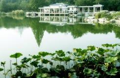 Lotus pool in September. royalty free stock photos
