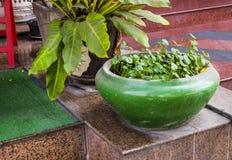 Lotus Pot Lizenzfreie Stockbilder