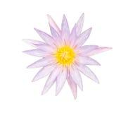 Lotus pourpre d'isolement sur le fond blanc photos stock