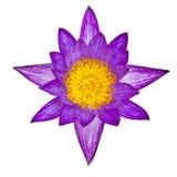 Lotus pourpre de vue supérieure d'isolement photos libres de droits