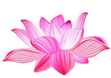 Lotus realistic vector illustration Royalty Free Stock Image