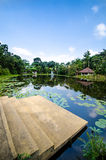 Lotus river. This is a beautiful view at lotus river Royalty Free Stock Images