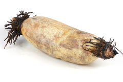 Lotus root Royalty Free Stock Photography