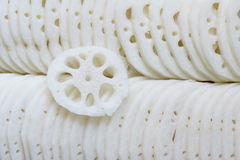 Lotus root. The close-up of dissected lotus root Stock Images