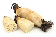Lotus root Stock Photo