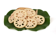 Lotus Root. Royalty Free Stock Images